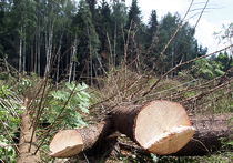 В Краскове «приватизировали» 100 гектаров леса